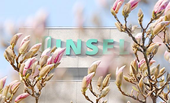 Gebäude Inselspital mt Magnolienblüten im Vorderhrund